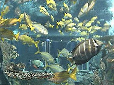 Toba Aquarium Japan  The Sunrise Project